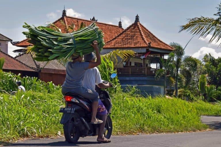 pixabay-scooter-bali